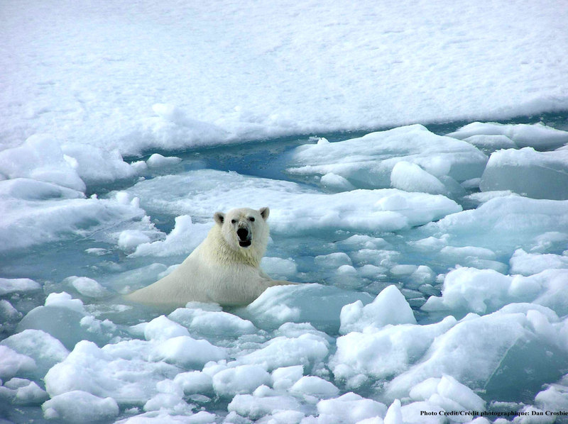 Polar Ice Caps Melting: (Problems and Solutions)