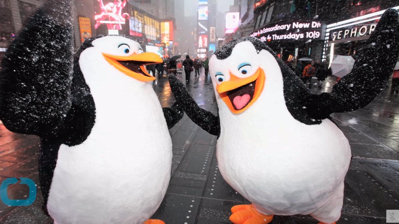 NYT Adores 'Gay Penguin' Parents Adopting Baby at Berlin Zoo