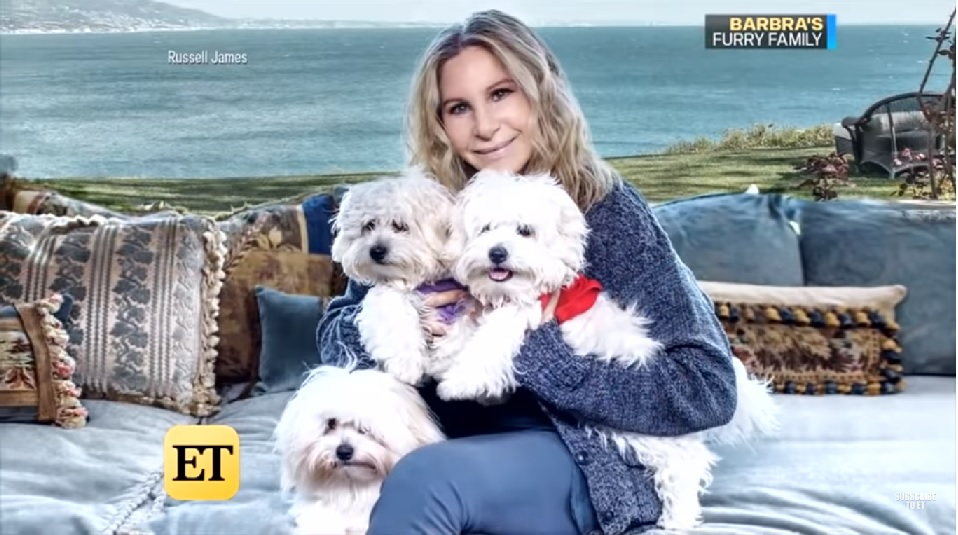 Climate Alarmist Streisand Flies Her Dogs 10,000 Miles for Performance